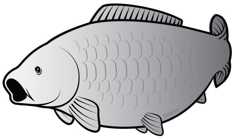 мире рыба карп картинка раскраска конституции